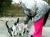 Macskaetetésért 150 ezres büntetés – rend van az országban
