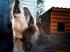 Nyolc hónap letöltendő börtönbüntetés a baltával agyonvert kutyáért