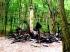 Leégett a Börzsöny egyik kedvelt menedékháza – senki sem tud semmit