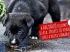 Fagyállóval mérgezték meg a kutyát – jutalom a nyomravezetőnek