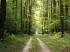 ERDŐPANORÁMA: Meddig élnek az erdők?