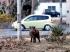 Csernobil még mindig kísért: Sugárzó vaddisznókat lőttek Svédországban